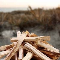Palo Santo (Holly Wood)